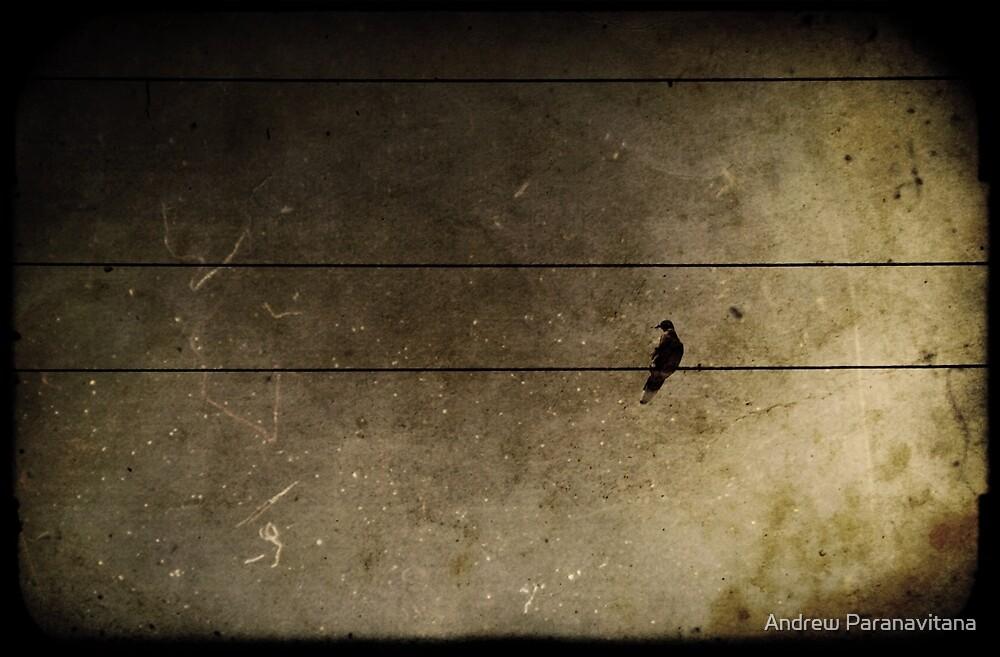 Emotional Distance by Andrew Paranavitana