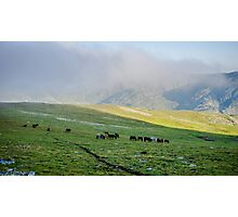 Herd Of Horses high In The Mountains Photographic Print