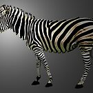 a slice of zebra by tinncity