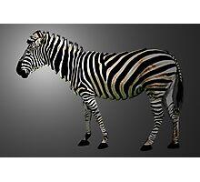 a slice of zebra Photographic Print