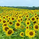 Sunflowers to  Brighten Your Day  by lorilee