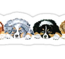 Australian Shepherd Puppies all 4 colors Sticker