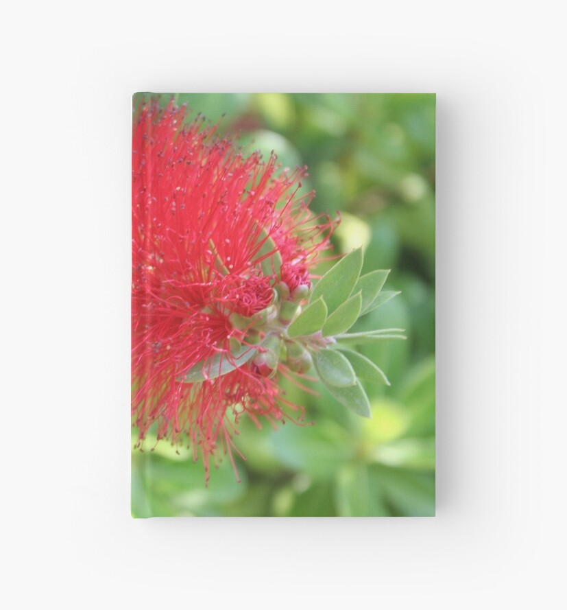 """Beautiful Bottle Brush Flower With Garden Background"