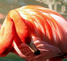American Flamingo ~ Radiance and Style by AuntDot