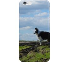 Sheepdog Ready on Rocks iPhone Case/Skin