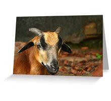 Posing Cameroon Sheep Greeting Card