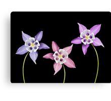 Aquilegia Flower Canvas Print