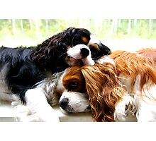 Brothers Cavaliers Photographic Print
