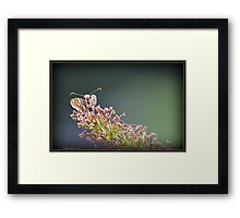 Most Cute and Curious Peck's Skipper in the World Framed Print