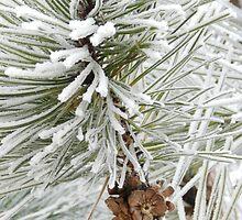 Frosty December Morning 10 by Marijane  Moyer
