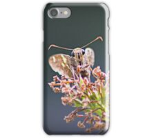 Most Cute and Curious Peck's Skipper in the World iPhone Case/Skin