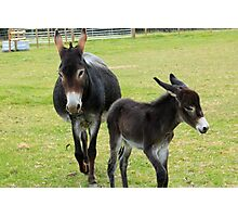 Jenny and foal Photographic Print