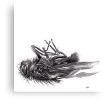 little things too, senescence I3 - charcoal drawing Canvas Print