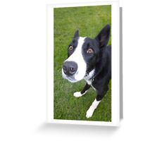 The focused collie Greeting Card