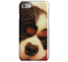 Tommy the Cavalier iPhone Case/Skin
