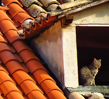Cat on a hot tiled roof by Sue Purveur