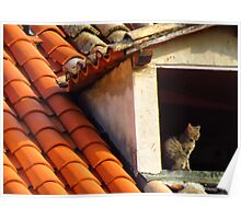 Cat on a hot tiled roof Poster