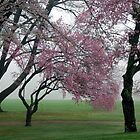Blooms in the Fog by Karen Checca