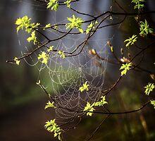Spider Web by SandraNightski