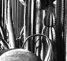 Cactus Garden B&W by Christopher Johnson
