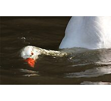 Diving goose Photographic Print