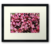 Pink More Pink! Framed Print