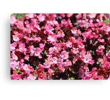 Pink More Pink! Canvas Print