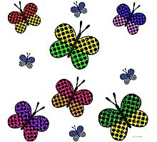 Mixed Butterflies Photographic Print