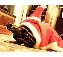 Santa tortoise  Photographic Print