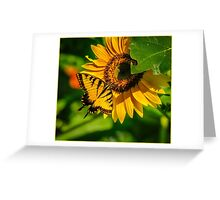 SWALLOWTAIL ON SUNFLOWER Greeting Card