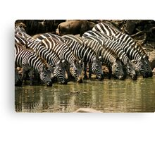 Eyes on the lineup along the Grumeti River Canvas Print