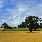 Wide Wales by Lesliebc