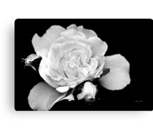 Rose Black and White Canvas Print