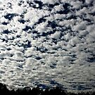 clouds by Terri~Lynn Bealle