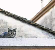 Cat on Roof in Earthtones by BrookeRyanPhoto