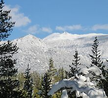 Snowy Freel Peak by Jared Manninen