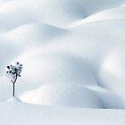 Little Snow Flower by Angelika  Vogel