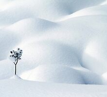 Little Snow Flower by Angelika  Vogel