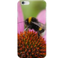 Bee on an Echinacea iPhone Case/Skin