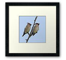 Pair of Waxwings (Bombycilla garrulus) Framed Print