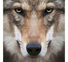 Wolf,digital photo,manipulated,animal,nature,ready to attack Photographic Print