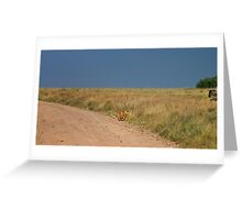Lion in wait Greeting Card