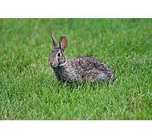 Happy Rabbit Photographic Print