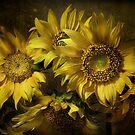 Suns by EbyArts