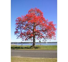 The 'red bubble' tree Photographic Print
