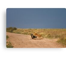 Simba's perfect catch Canvas Print