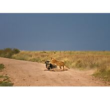 Simba's perfect catch Photographic Print