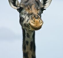 Giraffe smiles for her headshot by Owed To Nature