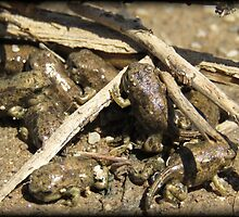 Toad-letts by Kimberly Chadwick