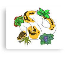 Pied Ball Python with Succulents Canvas Print